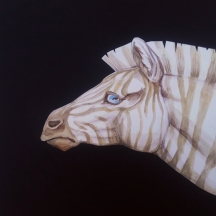 """Sad Zebra. Colored pencil and watercolor on cardstock paper. 2017. 12""""x12""""."""